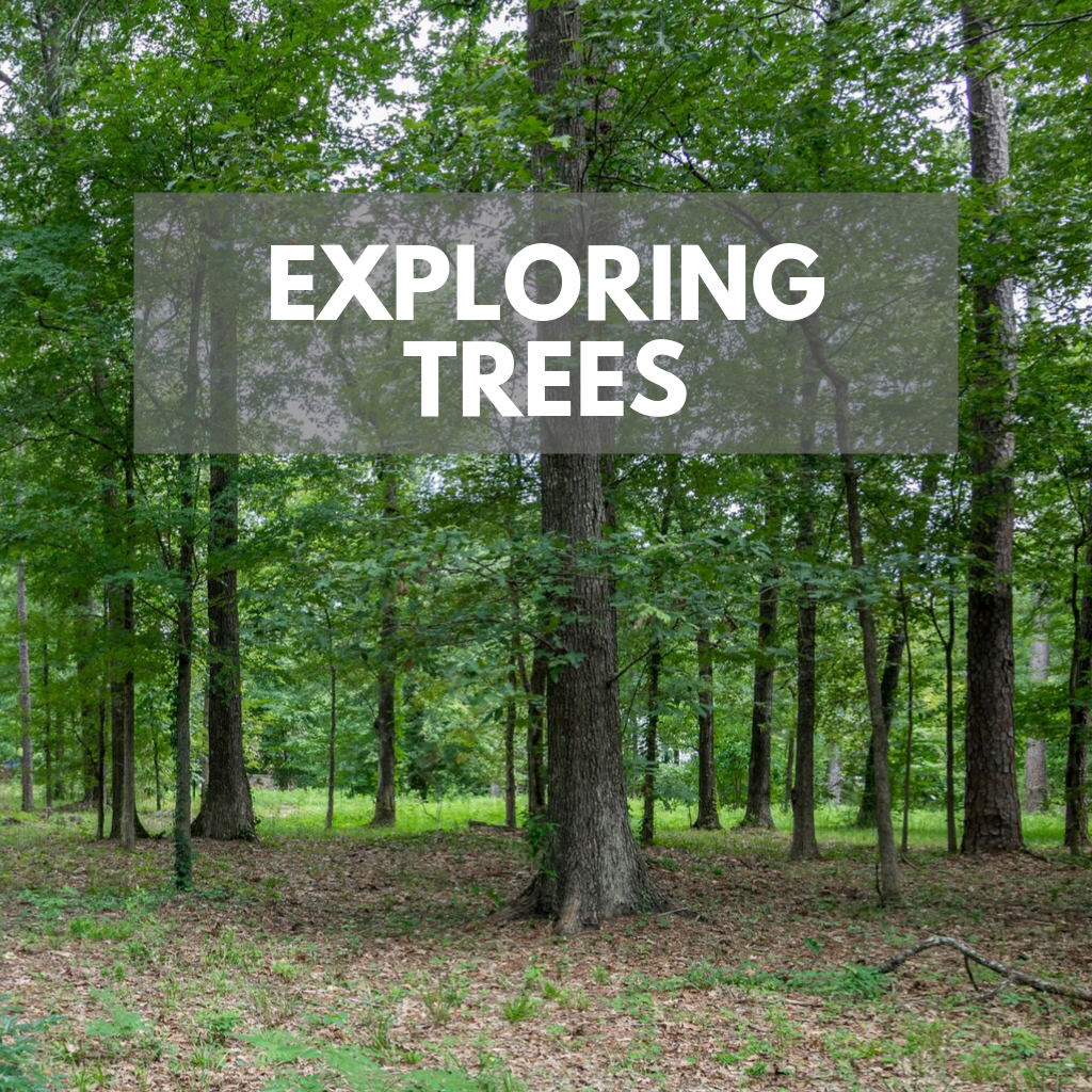 ExploringTrees